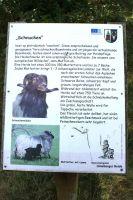 Heide_Wanderweg_320