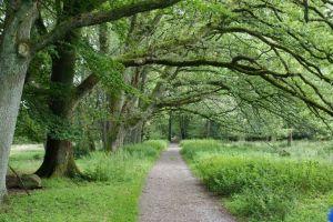 Heide_Spaziergang_Wilsede_Naturpark_002