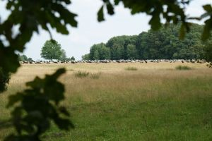 Heide_Spaziergang_Wilsede_Naturpark_009