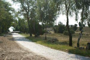 Heide_Spaziergang_Wilsede_Naturpark_015