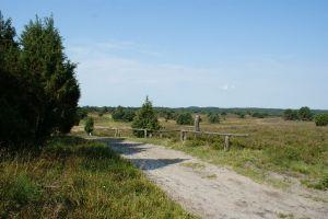 Heide_Spaziergang_Wilsede_Naturpark_017