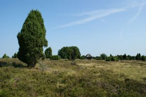 Heide_Spaziergang_Wilsede_Naturpark_021