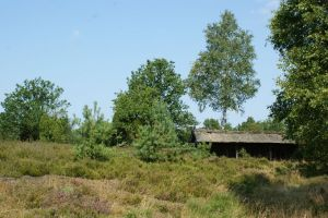 Heide_Spaziergang_Wilsede_Naturpark_024