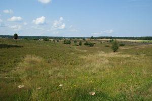 Heide_Spaziergang_Wilsede_Naturpark_028