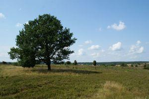 Heide_Spaziergang_Wilsede_Naturpark_029