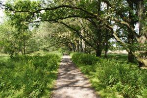 Heide_Spaziergang_Wilsede_Naturpark_030