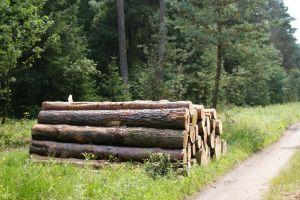 Heide_Spaziergang_Wilsede_Naturpark_034