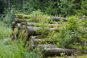Heide_Spaziergang_Wilsede_Naturpark_036