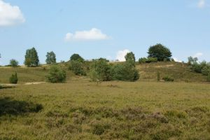 Heide_Spaziergang_Wilsede_Naturpark_043
