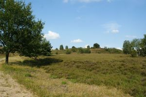Heide_Spaziergang_Wilsede_Naturpark_044