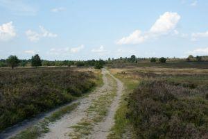 Heide_Spaziergang_Wilsede_Naturpark_045
