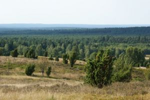 Heide_Spaziergang_Wilsede_Naturpark_051