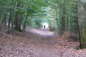 Heide_Spaziergang_Wilsede_Naturpark_055