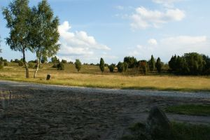 Heide_Spaziergang_Wilsede_Naturpark_056