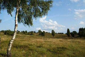 Heide_Spaziergang_Wilsede_Naturpark_058