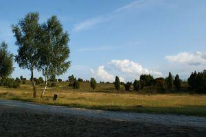 Heide_Spaziergang_Wilsede_Naturpark_063